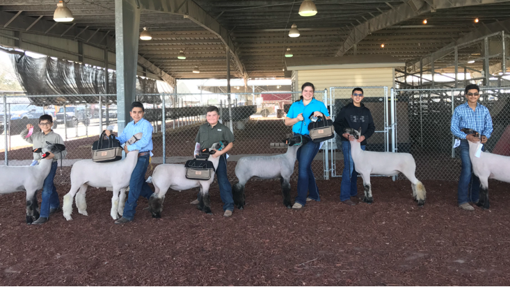 Roma ISD Students Show Prize Lambs
